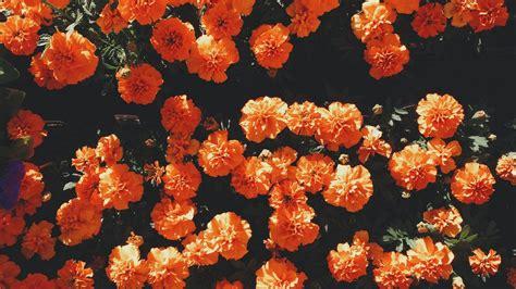 orange aesthetic desktop wallpaper 2021 wallpapers