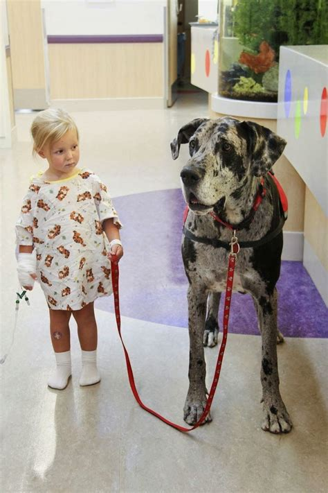 dogs   service animals  general  incredible