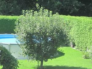 Apfelbaum Wann Schneiden : vernachl ssigten apfelbaum schneiden seite 3 garten ~ Frokenaadalensverden.com Haus und Dekorationen