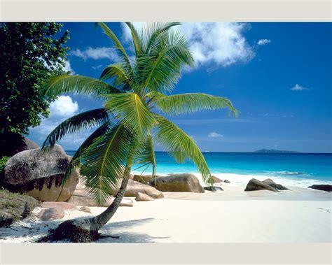 foto palme shop nature 0411 81 foto tapete vlies neu natur strand meer palme ebay