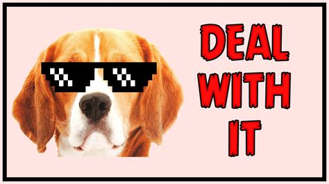 Deal With It  Perro Vs Gato  Youtube. Laser Eye Surgery Michigan All American Dish. Ultrasound Tech Programs Online. Study Tips For The Gre Multifamily Loan Rates. Balance Transfer Credit Card For Fair Credit. Money Market Application My Internet Password. North Carolina Engineering Schools. Jobs With Early Childhood Education Degree. Isotech Pest Management Online Diamond Buying