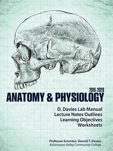 Anatomy  U0026 Physiology 2019