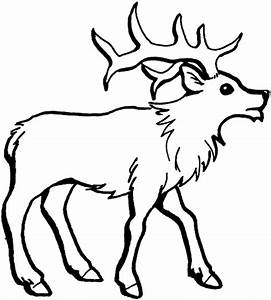 Free coloring pages of reindeer