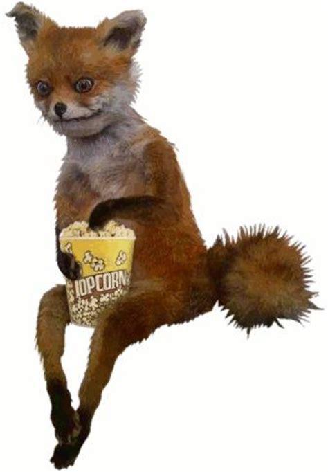 Taxidermy Fox Meme - clay fox eating popcorn futur pinterest bad taxidermy funny dachshund and adele