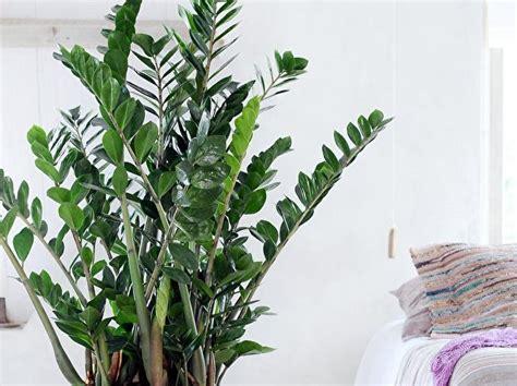 zimmerpflanzen mindern schadstoffe und laerm berlinde