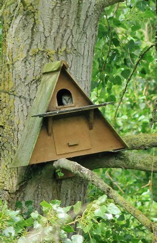 barn owl nesting box bird houses diy bird houses barn owl