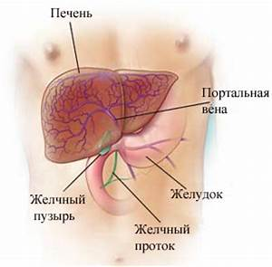 Лечение стеатогепатоза печени препараты