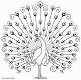 Peacock Coloring Pages Printable Drawing Birds Cool2bkids Indian Simple Peacocks Feather Drawings Craft Line Feathers Sketch Outline Embroidery Pic sketch template