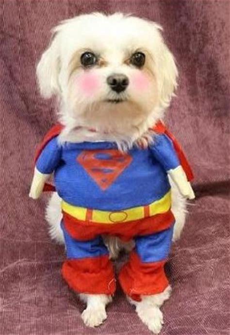 roupa fantasia cachorro gato superman tamanho p