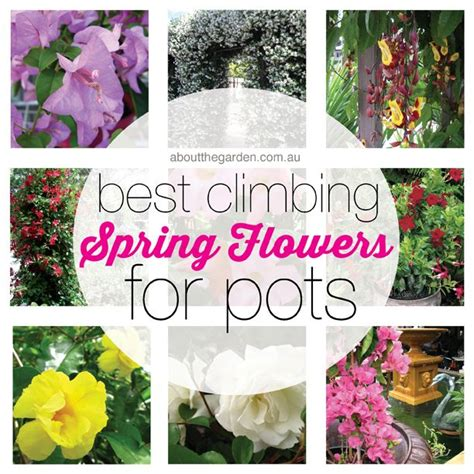 climbing plants for shade in pots 38 best images about container pot gardens on pinterest gardens planters and vegetable garden