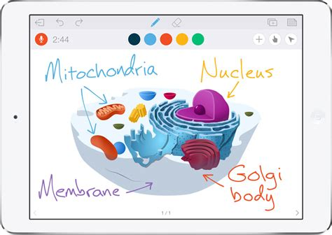 features educreations