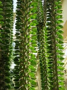 Plantes Grasses Extérieur : cact es et plantes grasses du parc ph nix ~ Dallasstarsshop.com Idées de Décoration