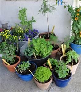 Kräuter Pflanzen Topf : design 5001383 krauter pflanzen topf anbauen kr uter im ~ Lizthompson.info Haus und Dekorationen