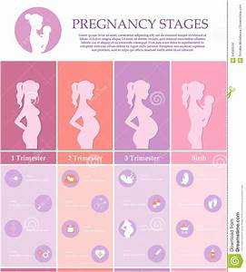 Pregnancy Stages, Trimesters And Birth. Stock Vector ...