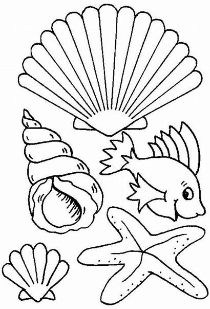 Sea Coloring Seashell Different Creature Types Pages