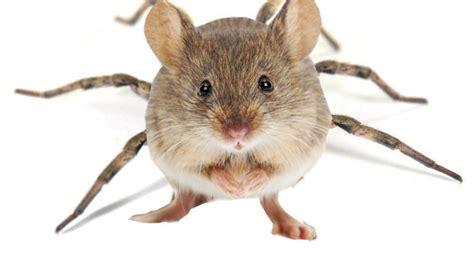 » Spiders As Big As Mice To Invade Sligo Homes