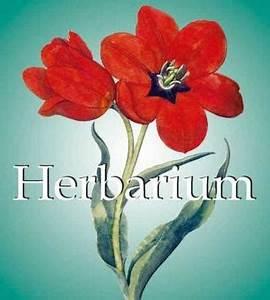 Was Ist Ein Herbarium : herbarium zvab ~ A.2002-acura-tl-radio.info Haus und Dekorationen
