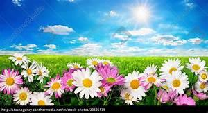 Wiese Mit Blumen : blumen gr ne wiese und blauer himmel mit strahlender ~ Watch28wear.com Haus und Dekorationen