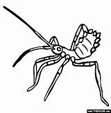 Assassin Insect Clipart Bug Coloring Pages Assasin Silverfish Clipground Template Experts Any Kissing sketch template