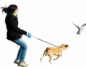 Person Walking Dog Pictures to Pin on Pinterest - PinsDaddy