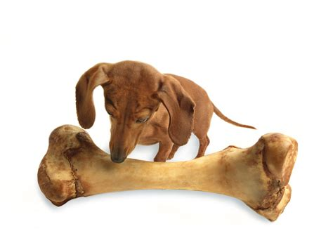 dog bone report from a genre author on the at an awp conference beason