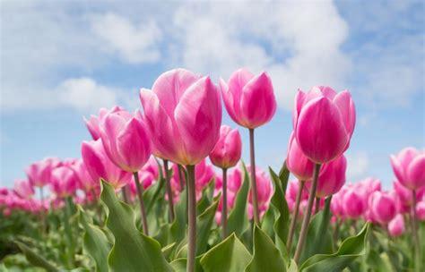 planting bulbs for flowers fall flower bulbs