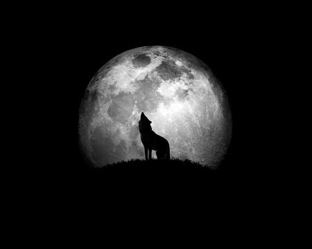wolf photography abstract background wallpapers