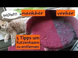 Katzenhaare Entfernen Kleidung : katzenhaare entfernen auf sofa kleidung teppich usw einfach und effektiv die besten 5 tipps ~ Orissabook.com Haus und Dekorationen