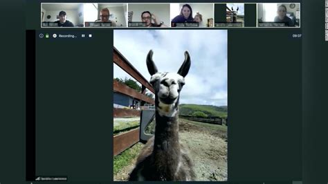 farm sanctuary    invite  llama  goat