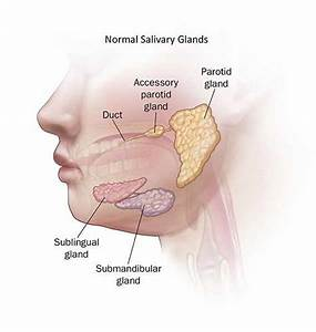 Tuesday Q And A  Intermittent Swelling In Jaw Should Be Evaluated  U2013 Mayo Clinic News Network