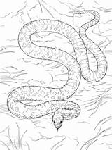 Snake Coloring Gopher Pages Snakes Coral Printable Realistic Desert Reptiles Supercoloring Animals Categories sketch template