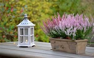 Herbstblumen Für Kübel : bild 4 herbstblumen ohne die besenheide w re kein richtiger herbst ~ Buech-reservation.com Haus und Dekorationen