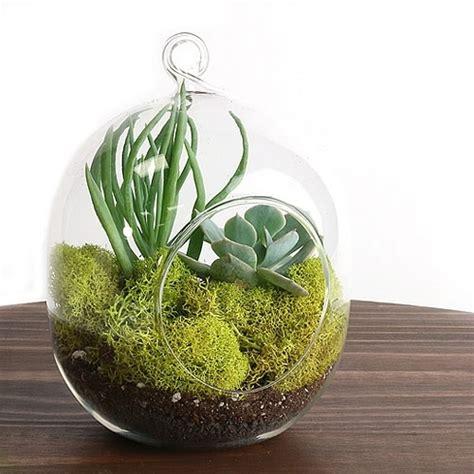 terrarium succulent kit hanging succulents easternleaf