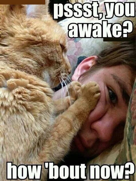 Morning Cat Meme Morning Meme Pictures Quotes Memes Jokes
