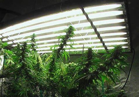 comment cultiver du cannabis la 28 images comment cultiver du cannabis la faq d 233 finitive