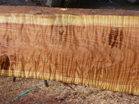 Live Edge Slabs | Domestic and Exotic Woods