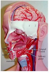 Biology 2404 A U0026p Basics