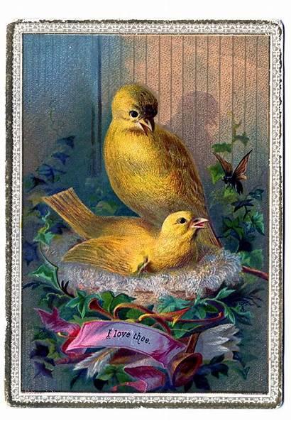 Canary Clip Nest Bird Birds Darling Graphics
