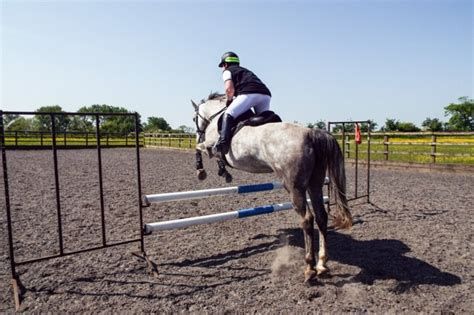 saddle helen connemara jumping lily customised especially