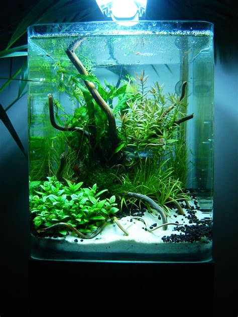 42 Best Aquascape Images On Pinterest  Fish Aquariums