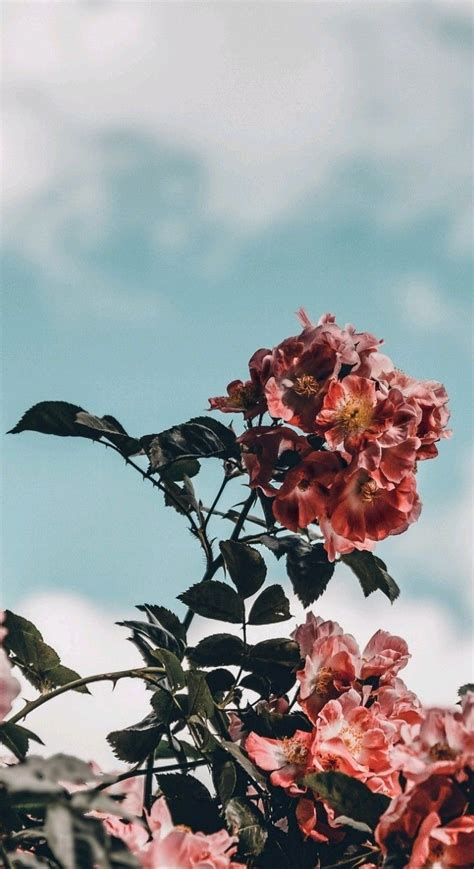 pin by mikayla grace on flowers iphone wallpaper