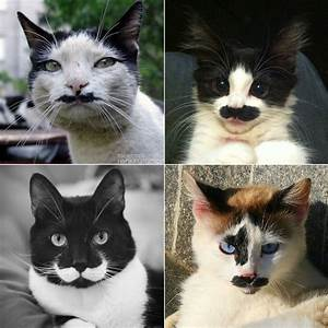 Cats with mustaches :)) | Cats | Pinterest | Cats, Lol and ...