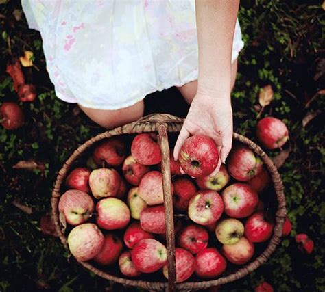 where to go for apple picking mini fall bucket list beautifully nutty