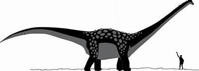 Antarctosaurus Dinosaur Svg Dinosaurs Scale Feet Human