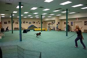 phoenix dog training and all the advantages to an indoor With dog training facility