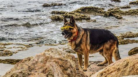 cing italien mit hund urlaub in italien die beliebtesten reiseziele mit hund reise