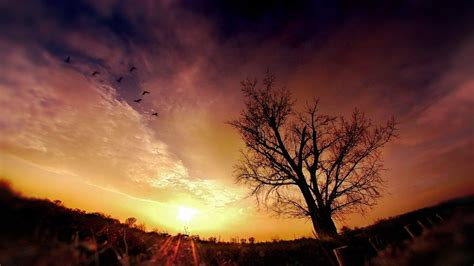 cool photography backgrounds wallpaperwiki