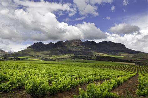 top stellenbosch wineries  visit