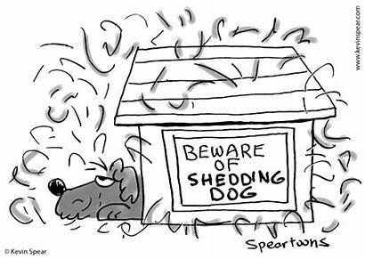 Shedding Dog Cartoon Beware Shedder Doghouse Moping