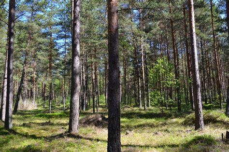 Mežu īpašniekus uzrunās individuāli | liepajniekiem.lv